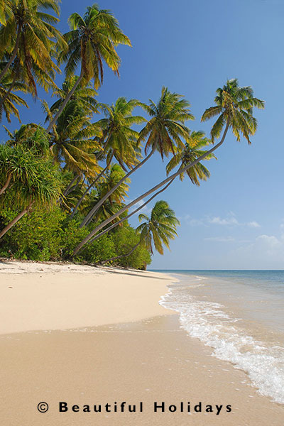 fiji beach scene with white sand and coconut trees