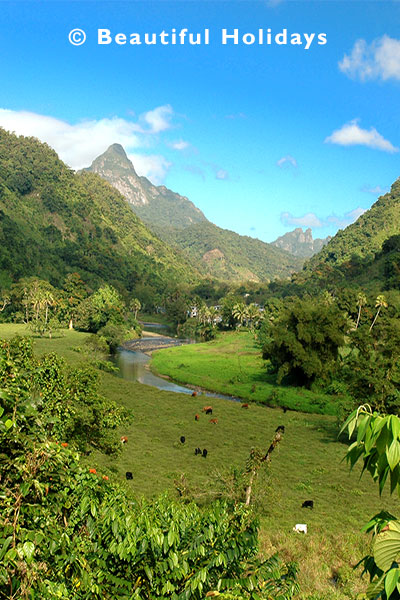 view of rainforest and waterfall in namosi highlands of fiji