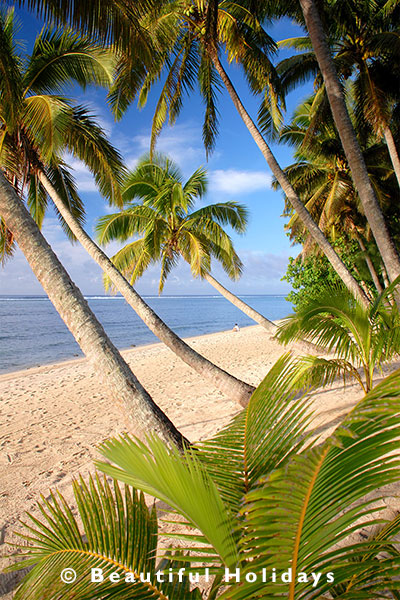 coconut palms in the south pacific islands
