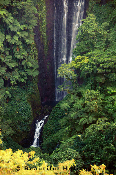 waterfall surrounded by tropical rainforest and tree ferns