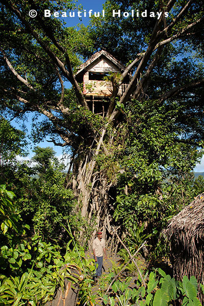tree house in bush plantaion on tanna island
